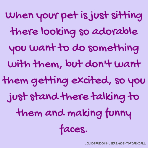 When your pet is just sitting there looking so adorable you want to do something with them, but don't want them getting excited, so you just stand there talking to them and making funny faces.
