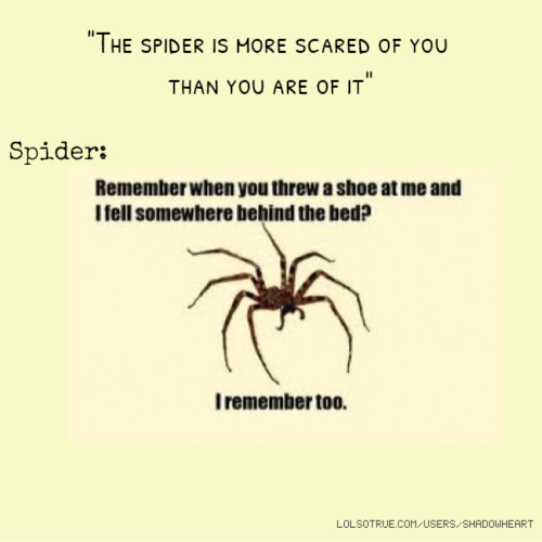 """""""The spider is more scared of you than you are of it"""" Spider:"""