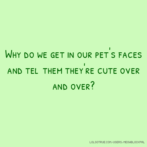 Why do we get in our pet's faces and tell them they're cute over and over?