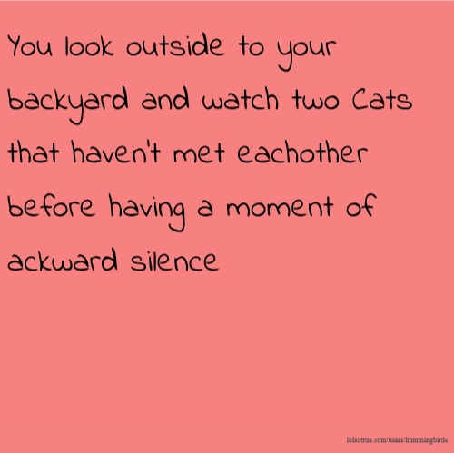 You look outside to your backyard and watch two Cats that haven't met eachother before having a moment of ackward silence