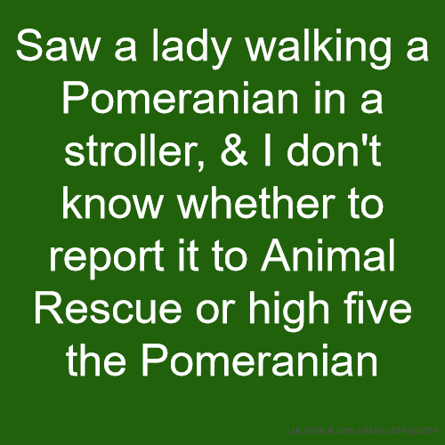 Saw a lady walking a Pomeranian in a stroller, & I don't know whether to report it to Animal Rescue or high five the Pomeranian