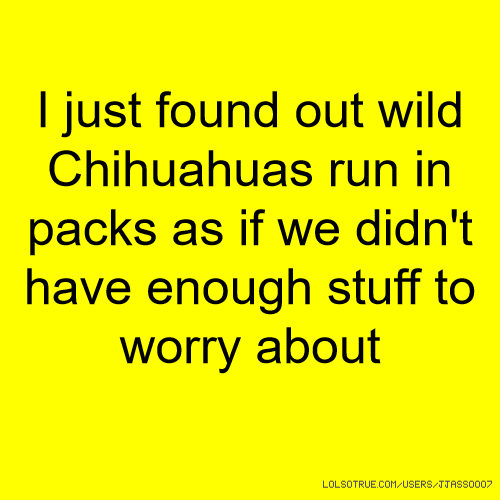 I just found out wild Chihuahuas run in packs as if we didn't have enough stuff to worry about