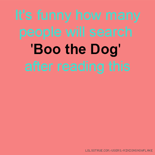 It's funny how many people will search 'Boo the Dog' after reading this