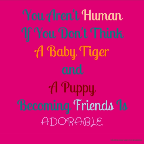 You Aren't Human If You Don't Think A Baby Tiger and A Puppy Becoming Friends Is ADORABLE.