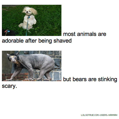 most animals are adorable after being shaved but bears are stinking scary.