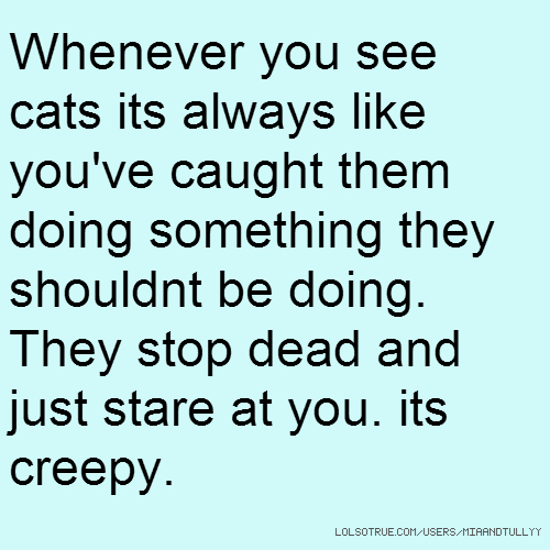 Whenever you see cats its always like you've caught them doing something they shouldnt be doing. They stop dead and just stare at you. its creepy.