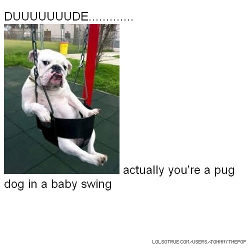 DUUUUUUUDE............. actually you're a pug dog in a baby swing