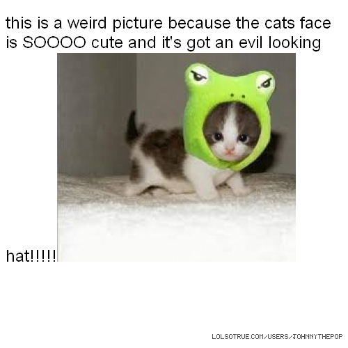 this is a weird picture because the cats face is SOOOO cute and it's got an evil looking hat!!!!!