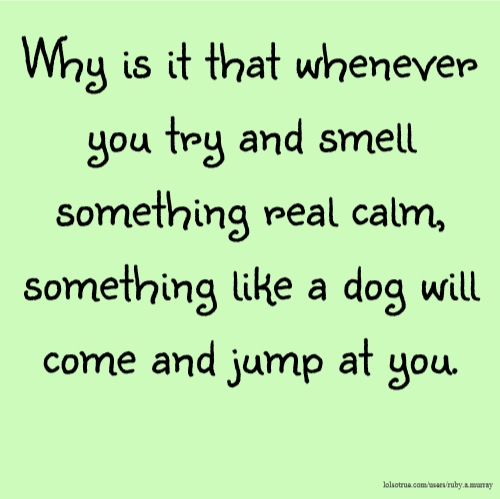 Why is it that whenever you try and smell something real calm, something like a dog will come and jump at you.