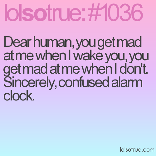 Dear human, you get mad at me when I wake you, you get mad at me when I don't. 