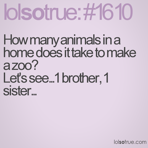 How many animals in a home does it take to make a zoo?