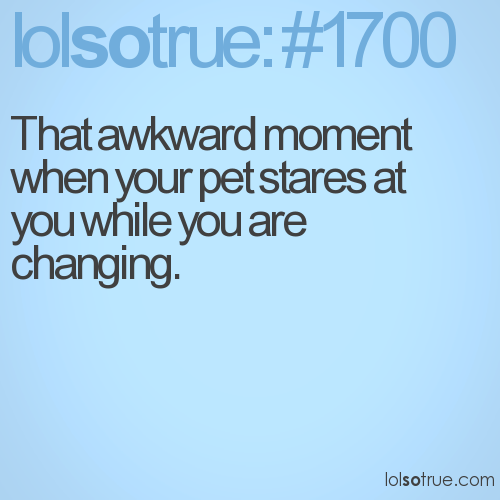 That awkward moment when your pet stares at you while you are changing.