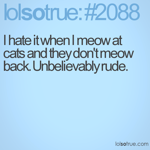 I hate it when I meow at cats and they don't meow back. Unbelievably rude.