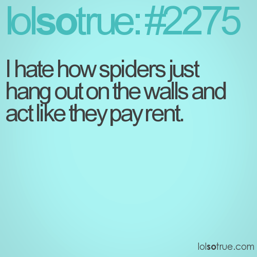 I hate how spiders just hang out on the walls and act like they pay rent.