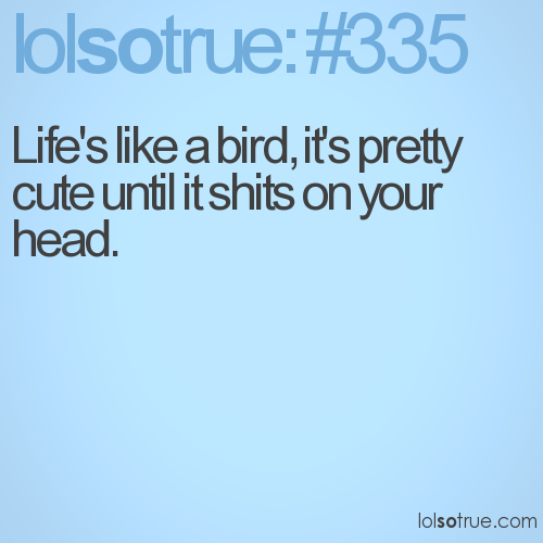 Life's like a bird, it's pretty cute until it shits on your head.