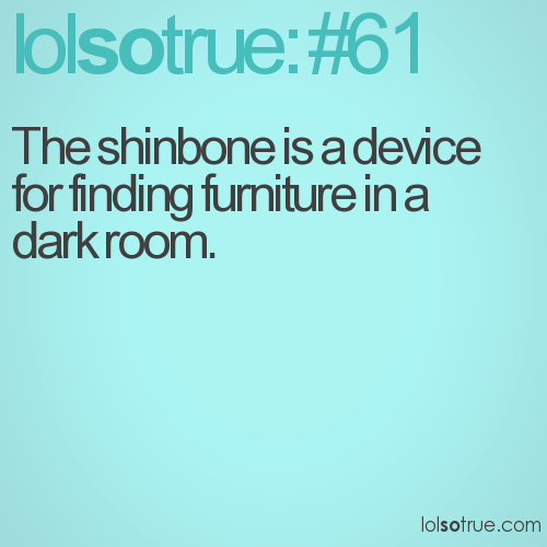 The shinbone is a device for finding furniture in a dark room.