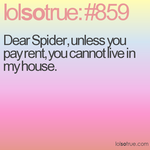 Dear Spider, unless you pay rent, you cannot live in my house.